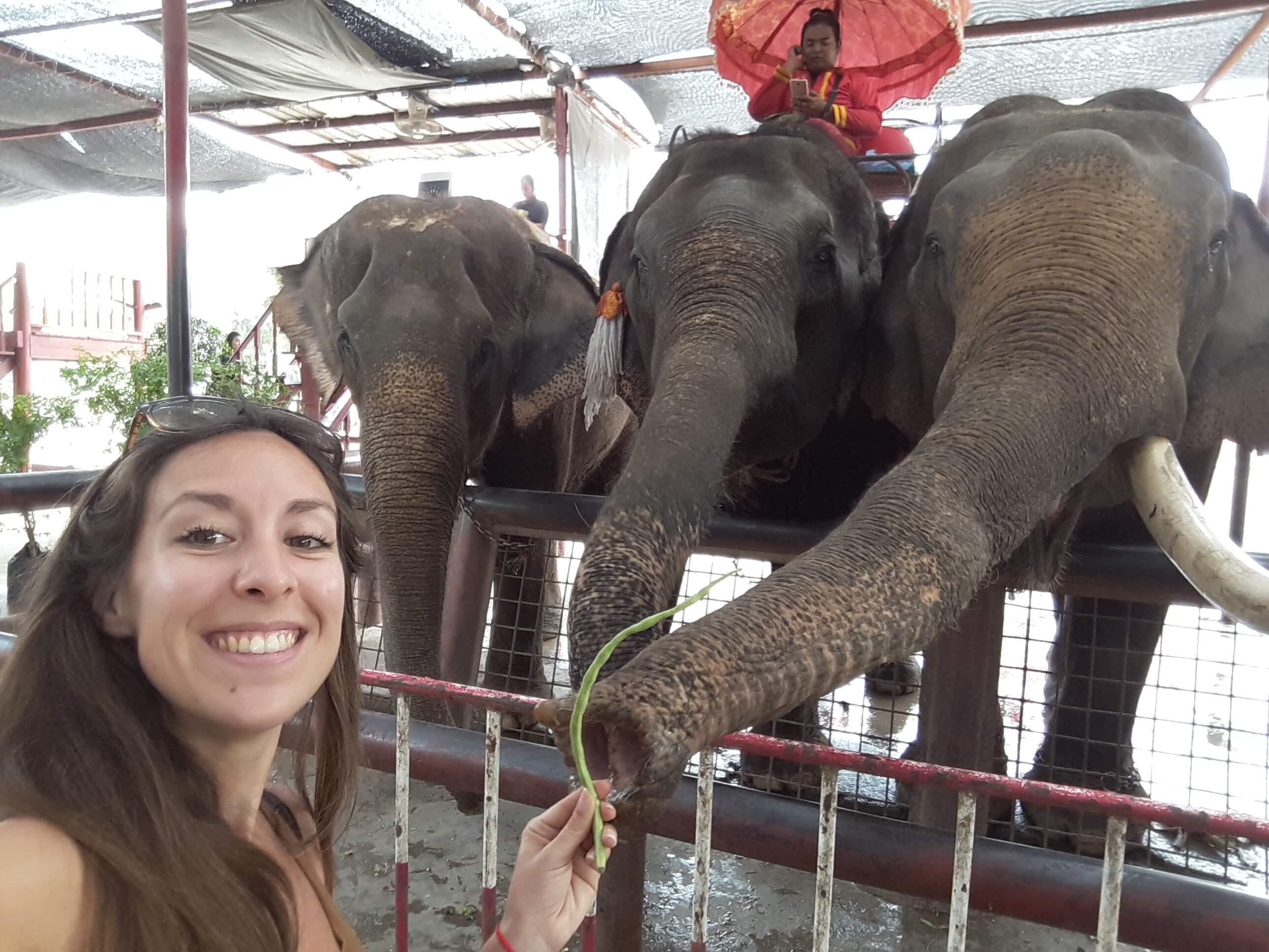 elefanti ad ayutthaya in thailandia