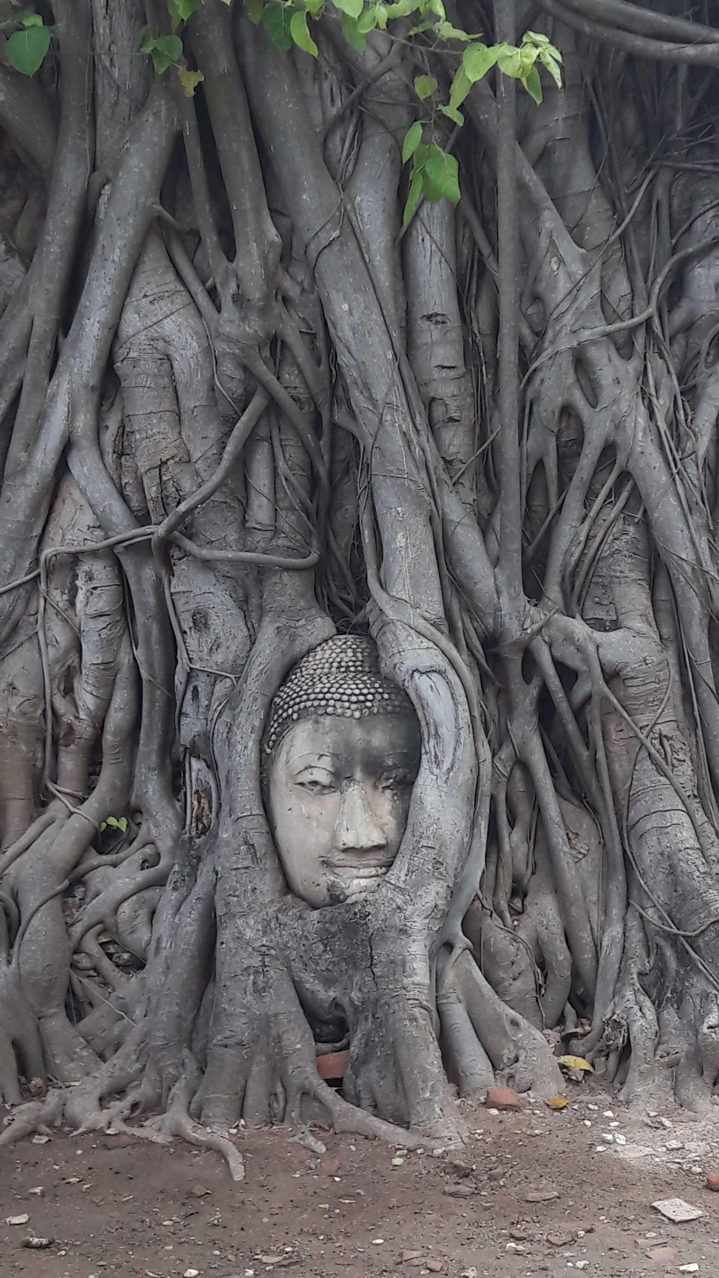 wat mahatat ayutthaya