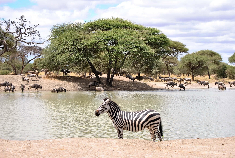 safari, parco nazionale del tarangire